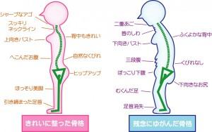 骨格につく肉の比較