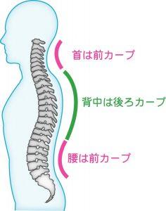 背骨のS字カーブ