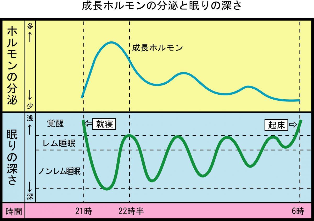成長ホルモンの分泌と眠りの深さ(子供時間)